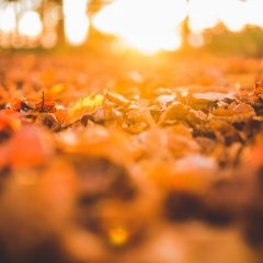 What Can We Learn from Falling Leaves?